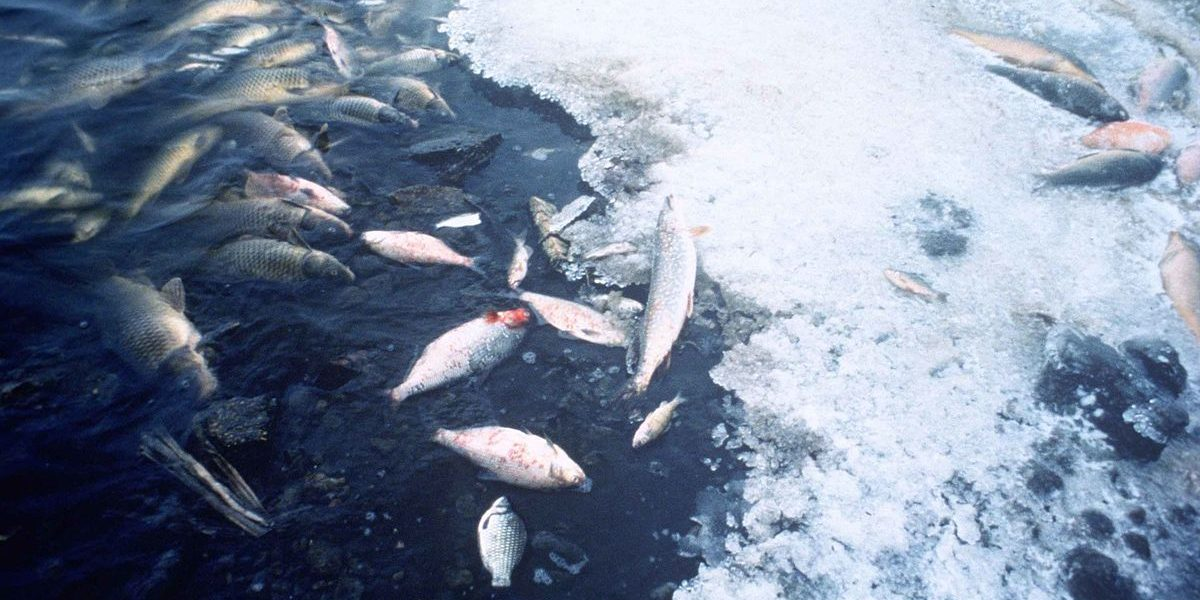 Effect fish pollution sex water