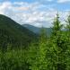 За незаконну вирубку навіть невеликої кількості дерев тепер каратимуть