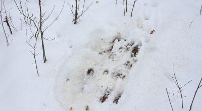 Мiсце_вiдпочинку_козул___Андрiй_Плига,_WWF_Ukraine